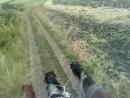 Верхом на сене