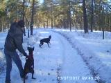 прогулка по лесу.