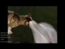 Дельфин и русалка🎼🐈🐬 смотреть со звуком