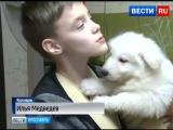 Ярославский школьник получил от Путина щенка швейцарской овчарки