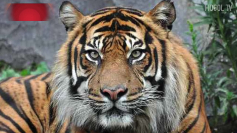 ПИТОН СЪЕСТ КОРОВУ 10 фактов о животных, в которые НЕВОЗМОЖНО ПОВЕРИТЬ