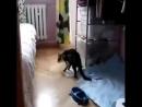 Кот на приколе