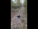 Хорошо побегать с подружкой цвергася цверглора собака лучшийдругчеловека зверьёмое моясобака милыйпёсик шнауцер цверг