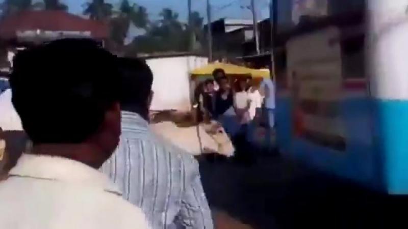 Корова вот уже на протижении 4 лет останавливает этот автобус потому что он сбил ее ребенка