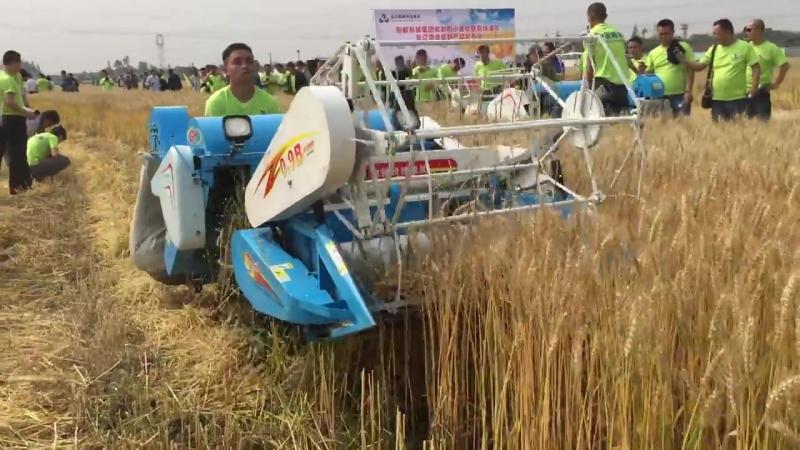 Harvester,Gangyi mini combine harvester Wheat Harvesting in Chongzhou China
