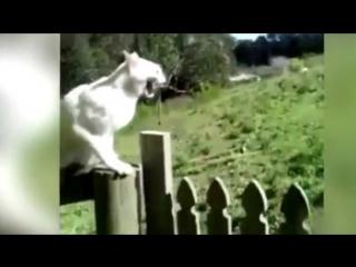 Смешные Приколы с Кошками! Коты и Дети