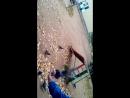 бесстрашный голубь сел на руку и кушает