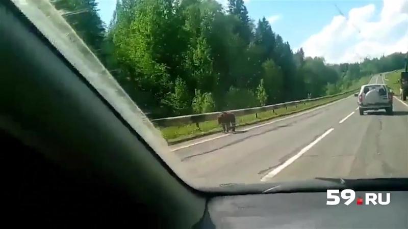 Медвежонок вышел к людям