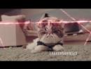 Secret agent cat Секретный агент кот