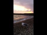 Чайка на пляже в Новом Афоне в Абхазии 22 сен 2017