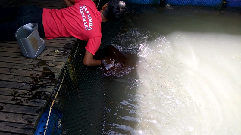 Langkawi Kilim Geoforest Park 3 fish farm