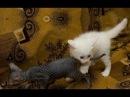 Забавное видео с кошками и котами Смешные кошки лучие приколы 6 Котики и кошечки Без монтажа