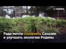 Высадил более 5 000 тысяч кедров на Сахалине