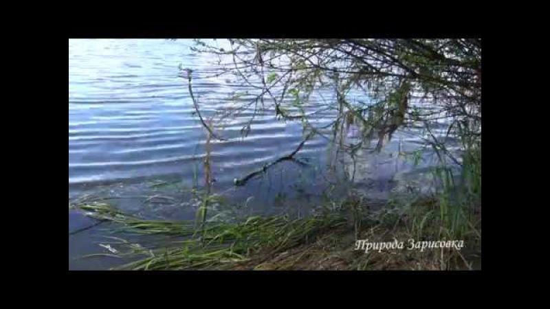 Река, Природа, звуки природы, лето, релакс, пение птиц, красивое видео, вода. Nature, relax