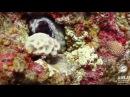Красочный подводный мир Красного моря. Дайвинг центр АХЛА в Эйлате