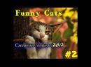 смешные коты и кошки 2017 приколы с котами и кошками 2017 приколы про кошек 2