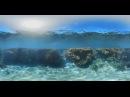 Reef Diving in Queensland Australia