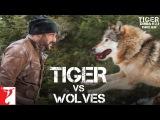 Tiger vs Wolves  - Promo  Tiger Zinda Hai  Salman Khan  Katrina Kaif  Ali Abbas Zafar