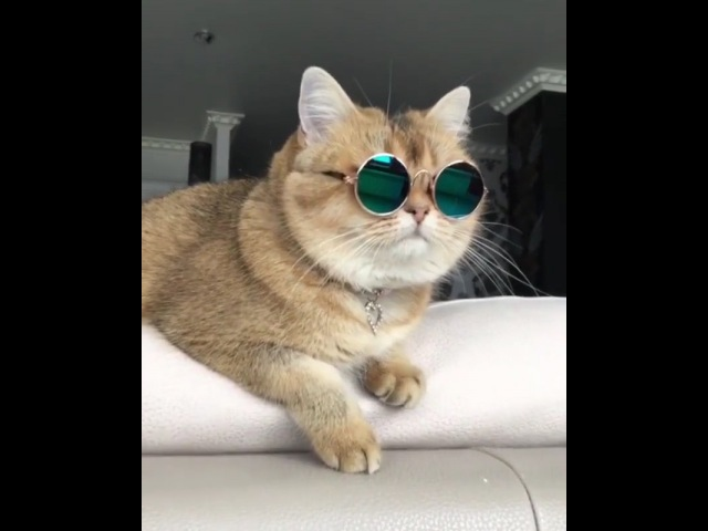 Котейная крутость 🐈