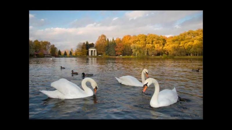 Вячеслав Никадимус - Лебяжье озеро. Vyacheslav Nikadimus - Swan lake