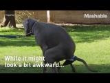 Dog poop device