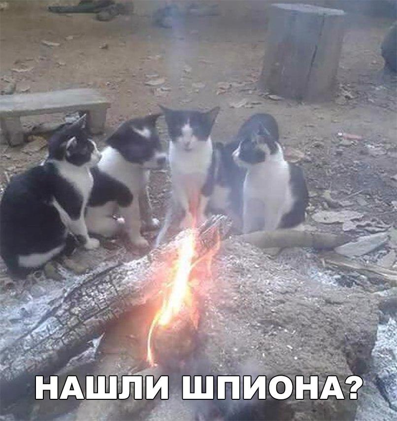https://pp.userapi.com/c840222/v840222623/5bc6a/730lInvOU6U.jpg