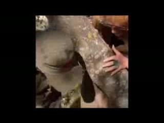 Алла   Пугачева и Лайма Вайкуле   -- Песни Без Фанеры  ...