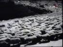 Белый караван/ Тамаз Мелиава, Эльдар Шенгелая (1964)