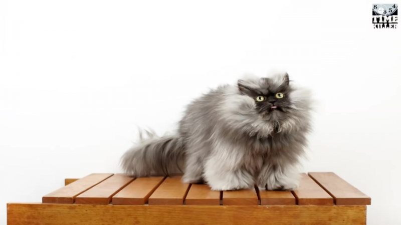 Top 10 Most Famous Cats In The World