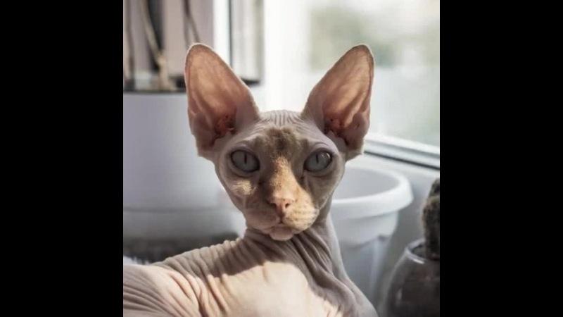 CATS me baby · coub, коуб
