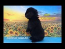 Декоративные карликовые кролики Для себя или в подарок Мир кроликов Питомник Зайкина усадьба