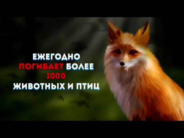№66 Автор: Степанов А.А., студент Цивильского аграрно-технологического техникума