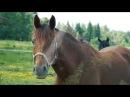 Красивый ролик про лошадей