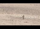 Йемен Герой Боец хусит спасает раненого товарища под обстрелом врага Без комментариев и музыки