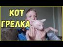 Приколы про животных Самые смешные видео с животными за неделю коты кошки собак ...