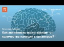 Мозг (1). Мозг: работа синапсов. vjpu (1). vjpu: hf,jnf cbyfgcjd.