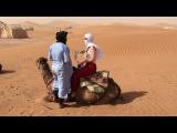 Camel standing up - Erg Chigaga Luxury Desert Camp Morocco