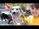 Собака УЛЫБАКА Живой ДОМ Мы заболели Кормим бездомных Собак МАМА с щенками и Кош...