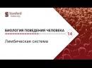 Биология поведения человека Лекция 14 Лимбическая система Роберт Сапольски 2010 Стэнфорд