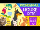 House Pets! | videos for babies, toddlers, kids | Little Genius TV™