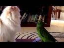 Как кошка с попугаем... Смех до слёз!