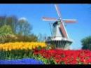 Herman Emmink Tulpen uit Amsterdam origineel