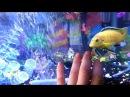 Аквариум. Говорящая рыбка. Кин-Дза-Дза. Ку или Кю