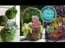 55 Creative Ways to Display Succulent Plants - Beautiful Succulent Planter Ideas