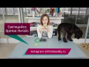 Светящиеся ошейники для собак мигающие брелки и клипсы