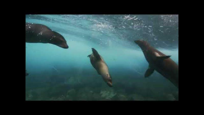Тайны тихого океана фильм