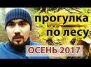 Осень 2017. Отдых на природе. Сбор грибов в лесу