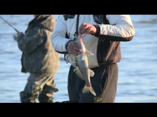 Рыбалка на джиг с берега. Тестирование приманок на судака