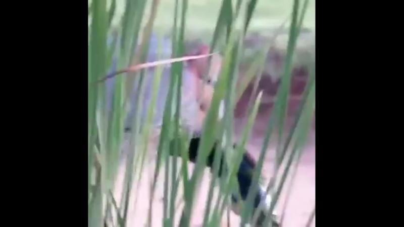 Охота цапли на крупную рыбу Журнал Спорт и Здоровый Образ Жизни club126967384