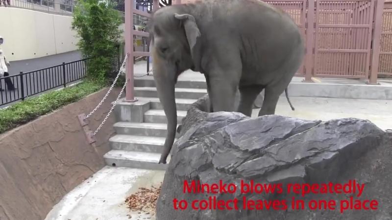 Слоны = животные полезные Нечто мы не понимаем